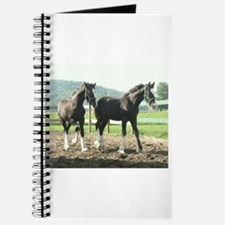 English Shire Foals Journal