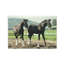 English Shire Foals Rectangle Magnet (10 pack)