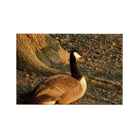Goose Rectangle Magnet