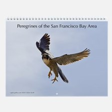 Raptor Calendar #6 Peregrines of San Francisco