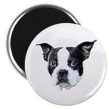 """Boston Terrier 2.25"""" Magnet (100 pack)"""