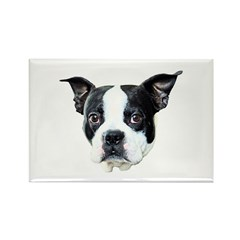 Boston Terrier Rectangle Magnet (10 pack)