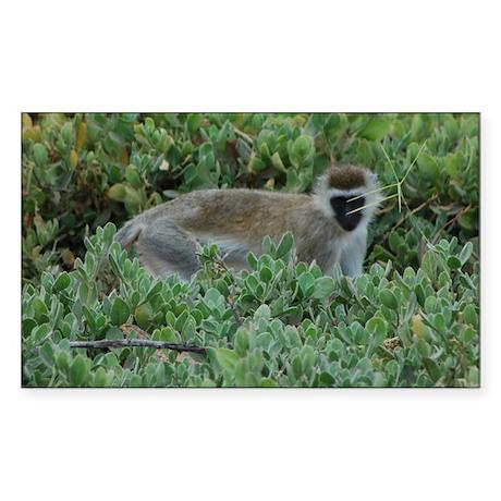 Vervet Monkey Sticker (Rectangle)