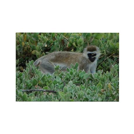 Vervet Monkey Rectangle Magnet