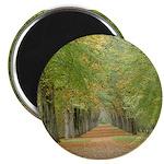 Tree Lane Magnet