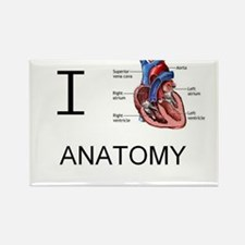 Cute Anatomy Rectangle Magnet (10 pack)