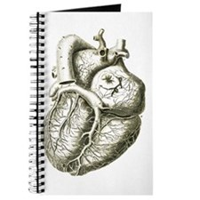 Unique Anatomical drawing Journal
