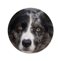 "Border Collie 3.5"" Button"