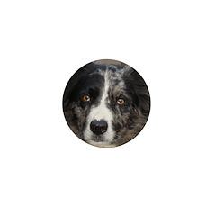 Border Collie Mini Button (100 pack)