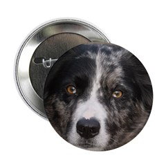 Border Collie 2.25