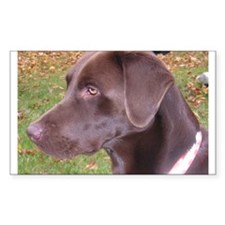 Chocolate Lab Rectangle Decal