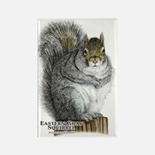 Eastern Gray Squirrel Rectangle Magnet