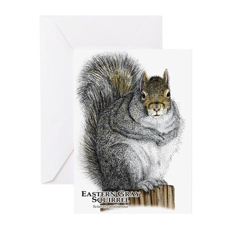 Eastern Gray Squirrel Greeting Cards (Pk of 10)