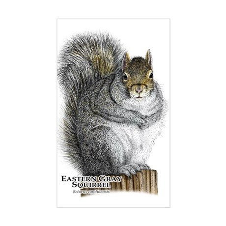 Eastern Gray Squirrel Sticker (Rectangle)