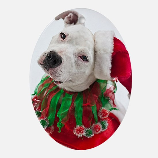Pit Bull Christmas Ornament (Oval)