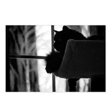 Kitty in the Window Postcards (Package of 8)