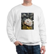 Seashell Resting in the Water Sweatshirt