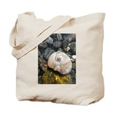 Seashell Resting in the Water Tote Bag