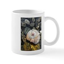 Seashell Resting in the Water Mug
