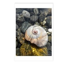 Seashell Resting in the Water Postcards (Package o