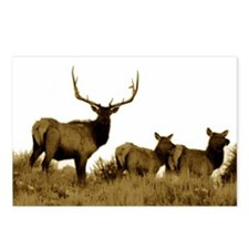 Bull elk sepia Postcards (Package of 8)
