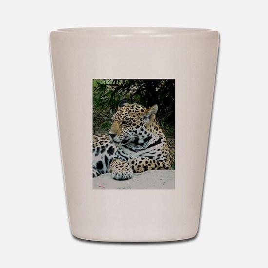 Jaguar Portrait Shot Glass