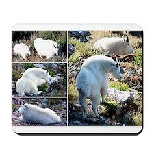 Rocky Mountain goats Mousepad