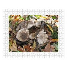 Squirrel Nook Cover