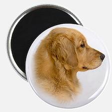 Golden Retriever Portrait Magnet