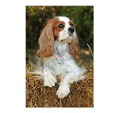 Cavalier King Charles Postcards (Package of 8)