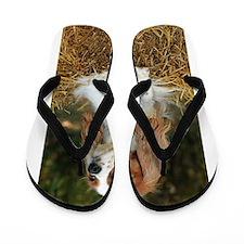 Cavalier King Charles Flip Flops
