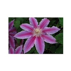 Clematis 'Nelly Moser' Rectangle Magnet (100 pack)