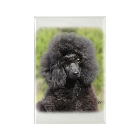 Poodle 9Y788D-043 Rectangle Magnet (10 pack)