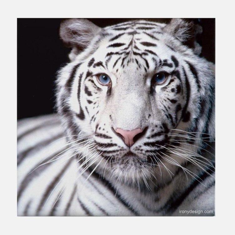White Bengal Tiger Tile Coaster