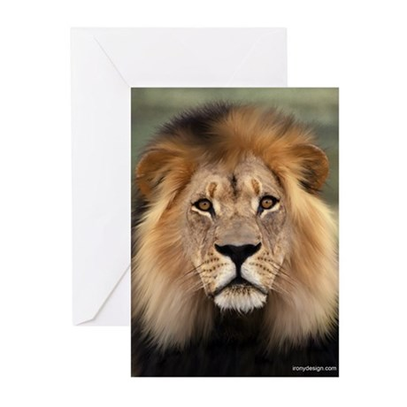Lion Photograph Greeting Cards (Pk of 10)