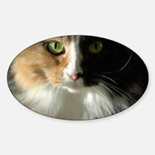The Cat's Eyes Decal