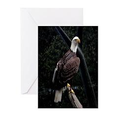 Amazing Eagle Decor Collectio Greeting Cards (Pk o
