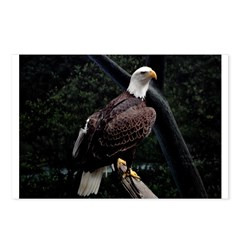 Amazing Eagle Decor Collectio Postcards (Package o