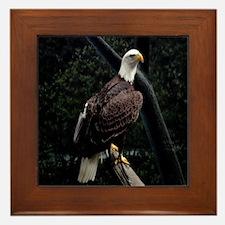 Amazing Eagle Decor Collectio Framed Tile
