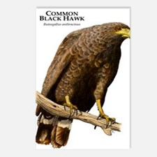 Common Black Hawk Postcards (Package of 8)