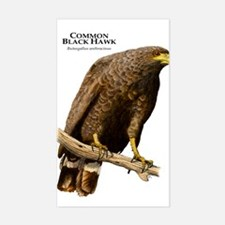 Common Black Hawk Decal