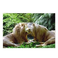 Affectionate Lions Postcards (Package of 8)