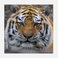 Siberian Tiger Photograph Tile Coaster