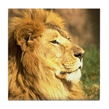 Lion Photograph Tile Coaster