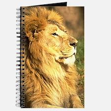 Lion Photograph Journal