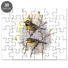 Townsend's Warbler Puzzle