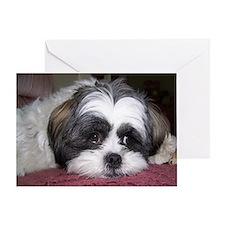 Cute Shih Tzu Dog Greeting Card