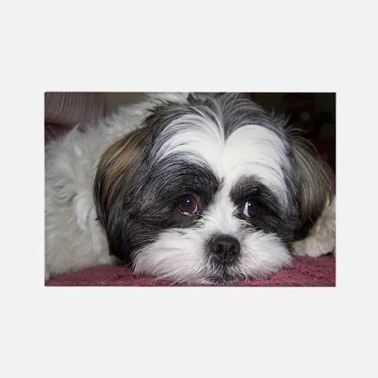 Cute Shih Tzu Dog Rectangle Magnet