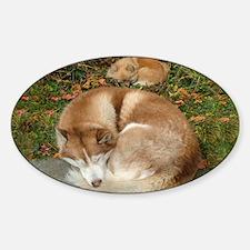 Siberian Husky & Pomeranian Decal