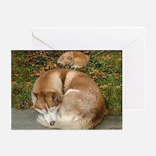 Siberian Husky & Pomeranian Greeting Cards (Packag